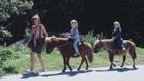Horseback and Pony Riding in Crans-Montana